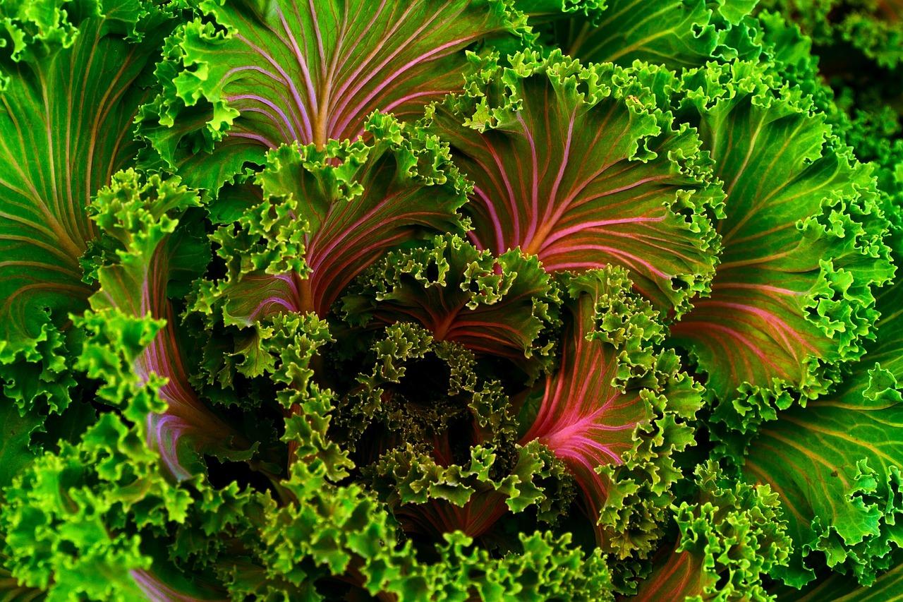 plant-690051_1280